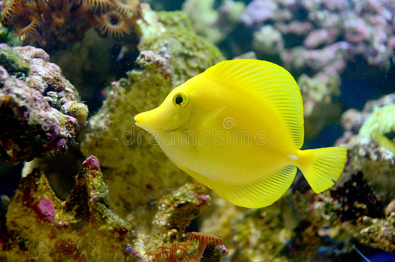 Tang amarillo foto de archivo libre de regalías