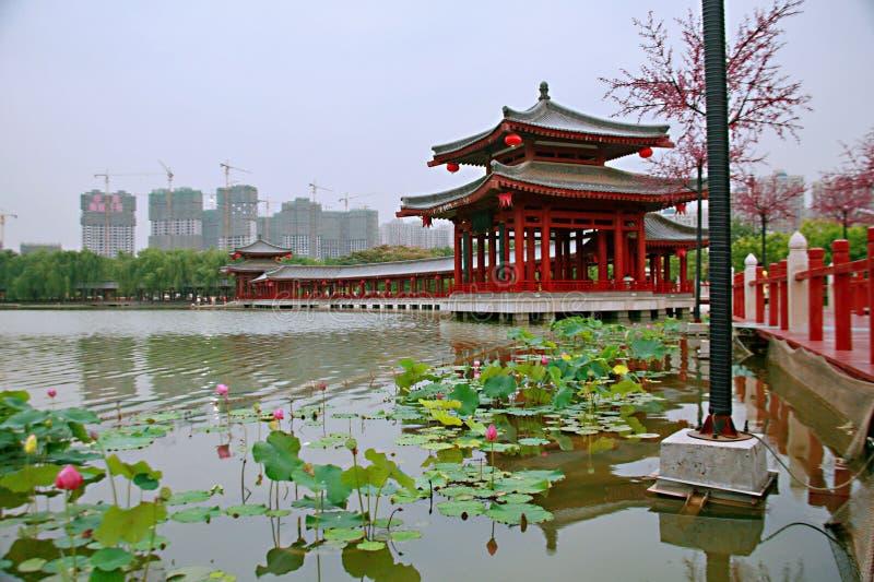 Tang Paradise imagen de archivo