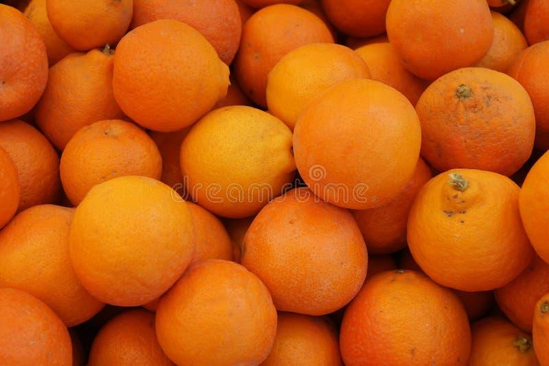 Tangelo de Minneola, tangelo 'Tangelo de la fruta cítrica x de Minneola' fotos de archivo