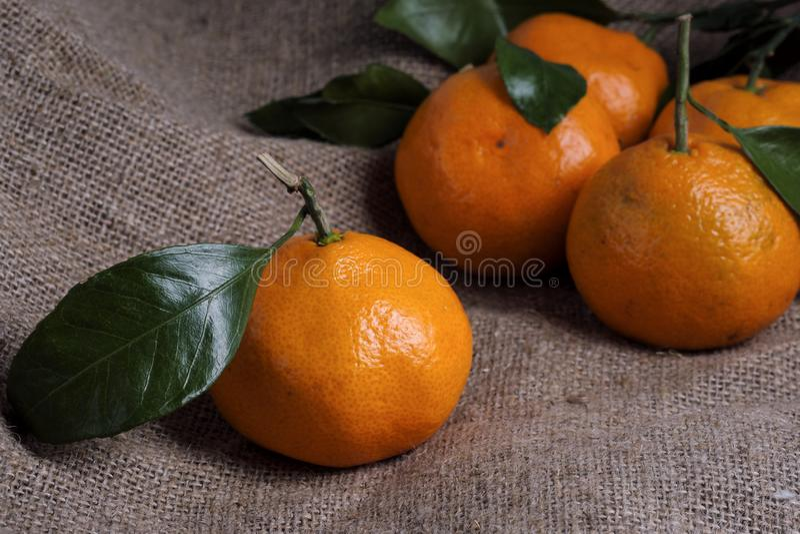 Tangerin ligger på ett grått bakgrundstyg, filialer och gröna sidor Organisk mat arkivbild
