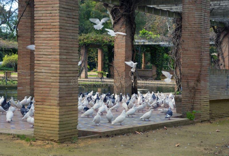 Tangerinas selvagens na rua fotos de stock royalty free