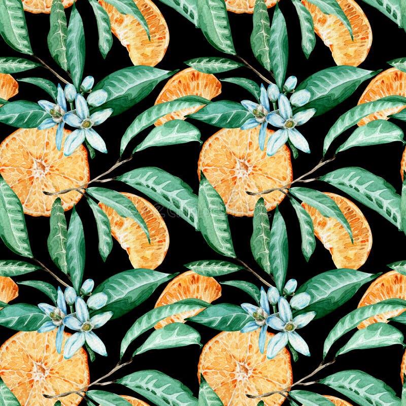 Tangerine άνευ ραφής σχέδιο Πορτοκαλιά περικοπή, λουλούδια και φύλλα Απεικόνιση Watercolor που απομονώνεται στο μαύρο υπόβαθρο διανυσματική απεικόνιση