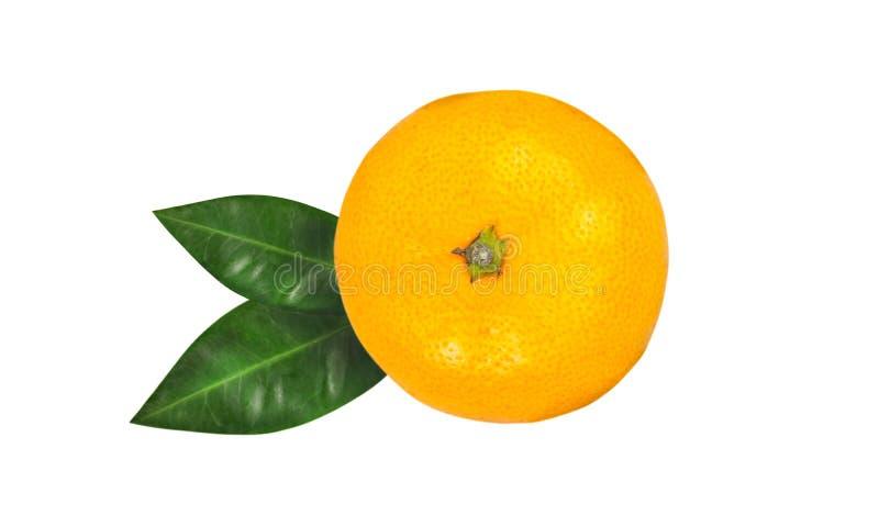 Tangerine ή κλημεντίνη με το πράσινο φύλλο που απομονώνεται στο άσπρο υπόβαθρο στοκ φωτογραφία με δικαίωμα ελεύθερης χρήσης