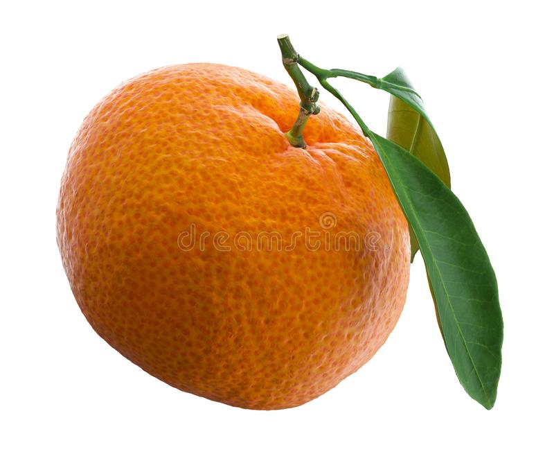 Tangerine ή κλημεντίνη με το πράσινο φύλλο που απομονώνεται στο άσπρο υπόβαθρο απεικόνιση αποθεμάτων