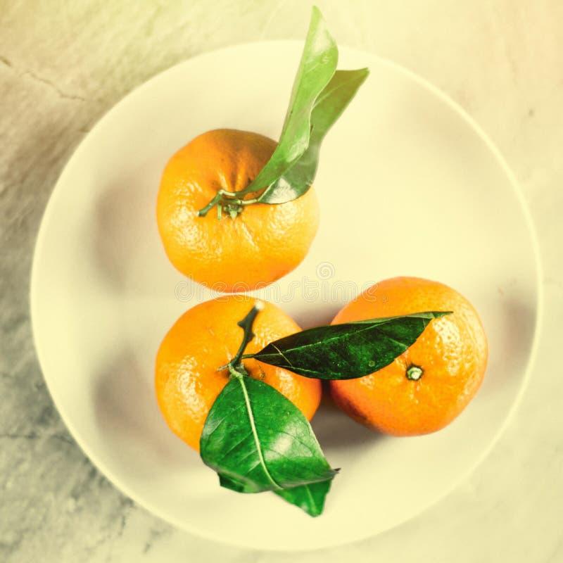 Tangerine απόλαυση στοκ φωτογραφίες με δικαίωμα ελεύθερης χρήσης