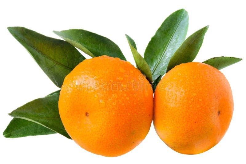 Tangerine δύο με τα φύλλα που απομονώνονται στοκ φωτογραφίες με δικαίωμα ελεύθερης χρήσης