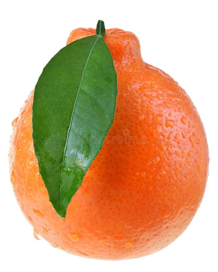 Tangerine εσπεριδοειδή με τα φύλλα στοκ εικόνες
