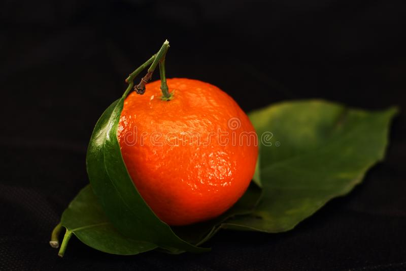 Tangerine με το φύλλο στοκ εικόνες