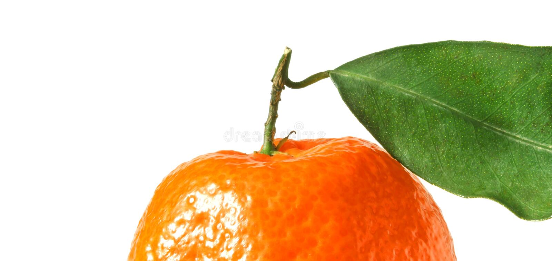 Tangerine με το φύλλο στοκ φωτογραφία