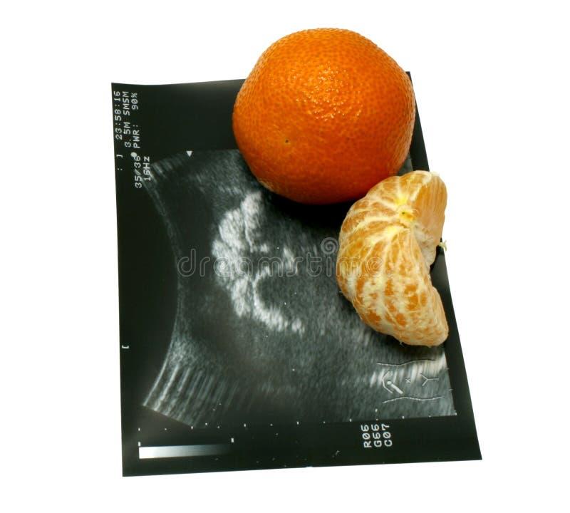 tangerine υπέρηχος στοκ εικόνα με δικαίωμα ελεύθερης χρήσης