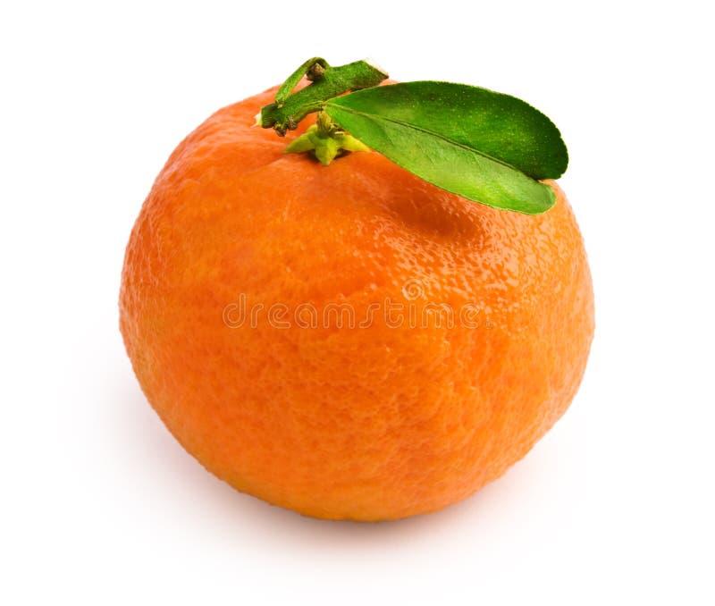 tangerine φύλλων στοκ φωτογραφία