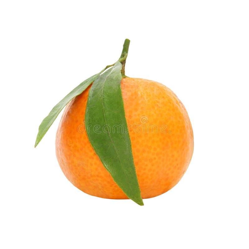 tangerine зеленых листьев зрелый изолировано стоковые фото