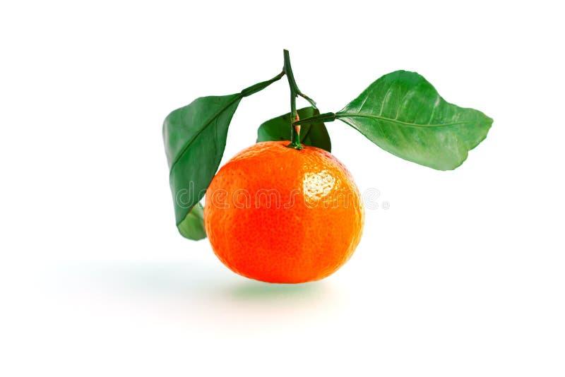 Tangerine или Клементин при зеленые лист изолированные на белой предпосылке стоковые фото