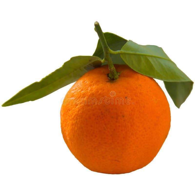 Tangerine или Клементин при зеленые лист изолированные на белом backg стоковые изображения