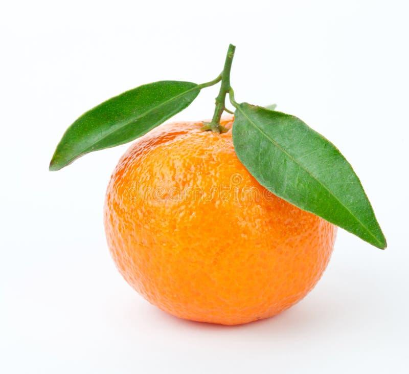 Tangerine imagens de stock