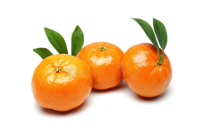 Tangerine fotografia stock