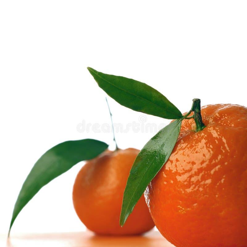 tangerine fotografering för bildbyråer