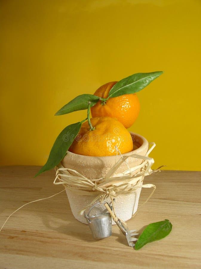 tangerine στοκ φωτογραφίες