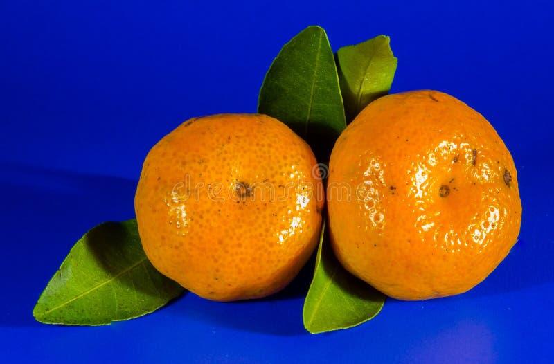 Цитрус, Tangerine, плод, Клементин стоковое фото rf