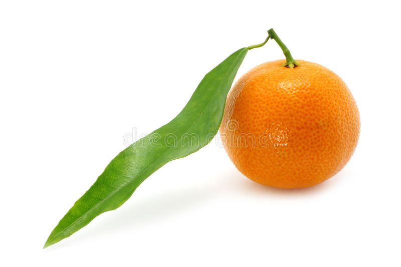 Tangerine with a green leaf stock images