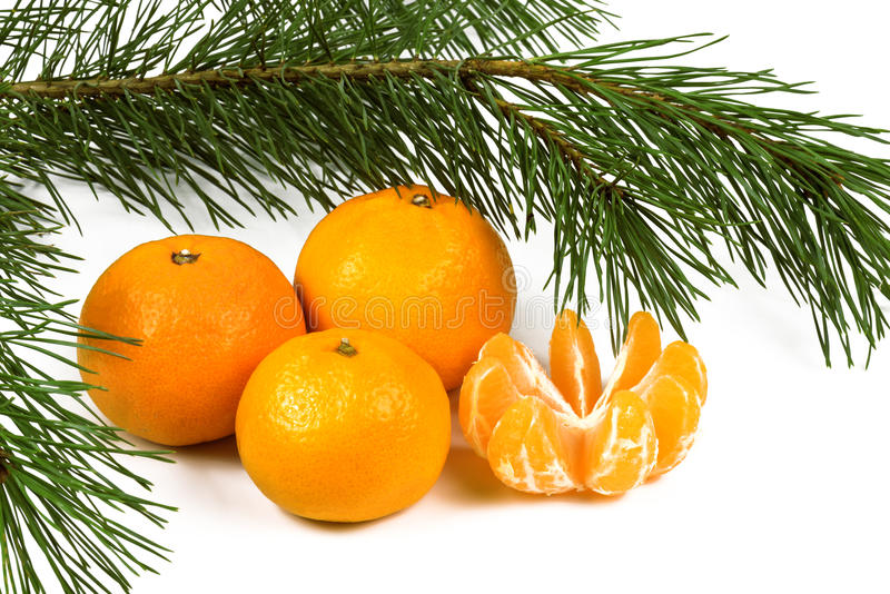 Tangerine and green pine branches close up. On a white background stock image
