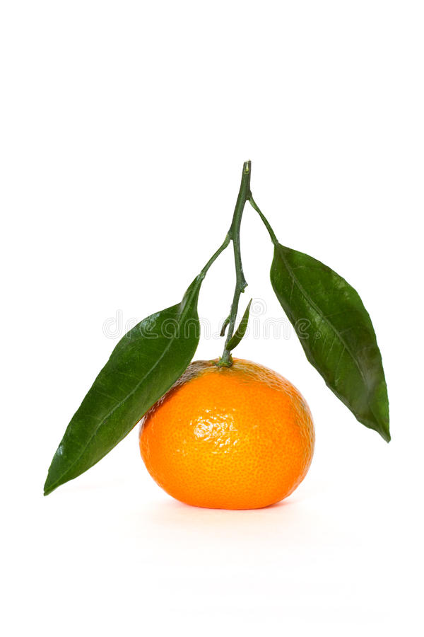 Tangerine with leaf royalty free stock photo