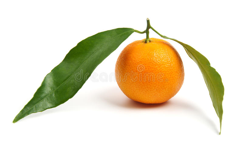 Download Tangerine With Leaves Stock Images - Image: 22934914