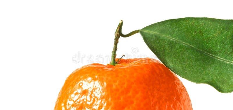 Tangerine mit Blatt stockfotografie