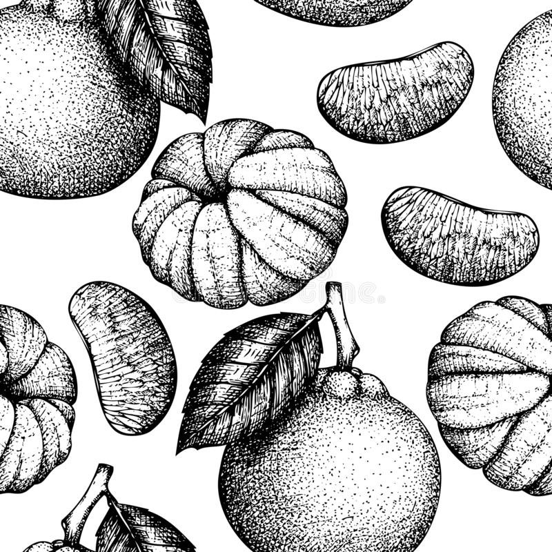 Seamless pattern with hand drawn tangerine illustrations. Vector ccitrus background. Summer fruits drawing for logo, icon, label, vector illustration