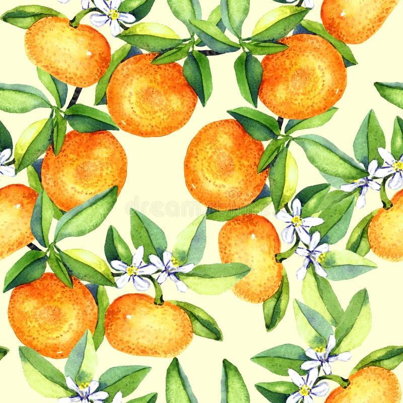 Tangerine rozgałęzia się z owoc i białymi kwiatami na miękkim żółtym tle ilustracji