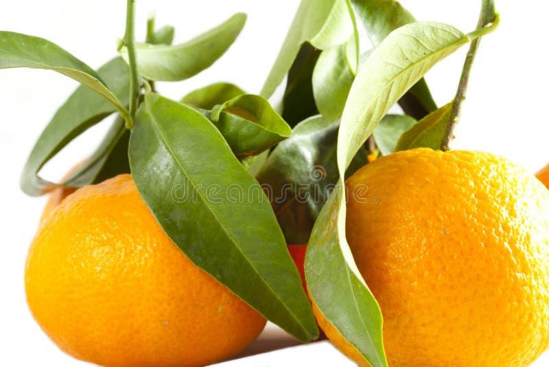 Download Tangerinen stockbild. Bild von grün, mandarine, säure - 27728459