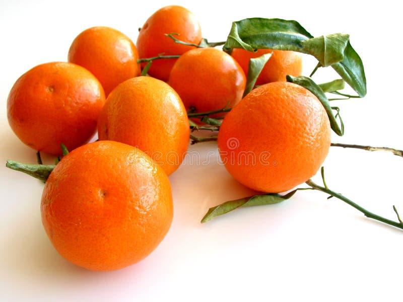 Tangerinen mit Blättern auf Weiß 3 stockfotos