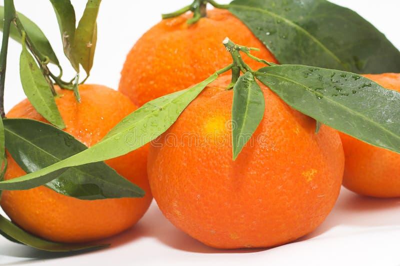 tangerines λευκό στοκ φωτογραφίες με δικαίωμα ελεύθερης χρήσης