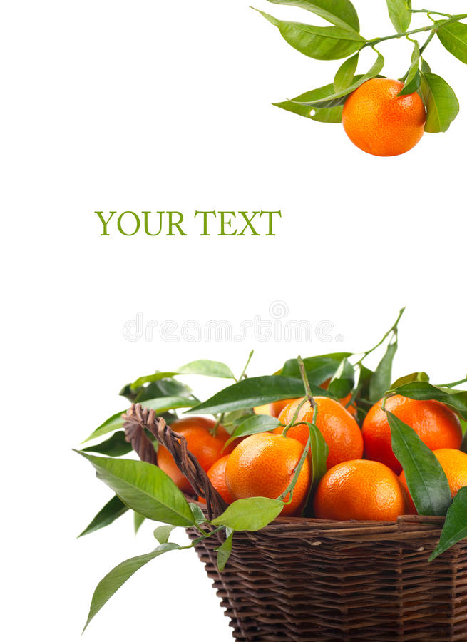 Tangerines Royalty Free Stock Photography