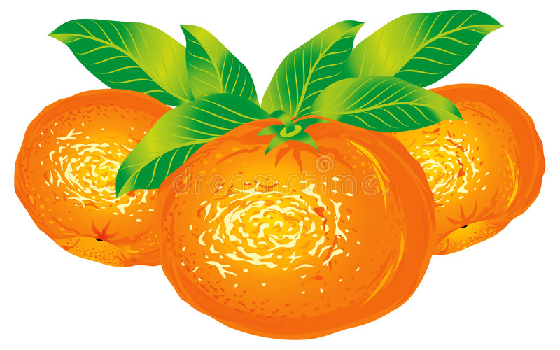 Tangerines. Raster version of vector image of tangerines There is in addition a vector format (EPS 8 royalty free illustration