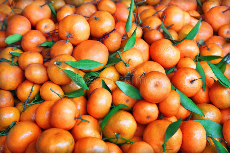 Download Tangerines stock image. Image of leafs, green, natural - 27357441