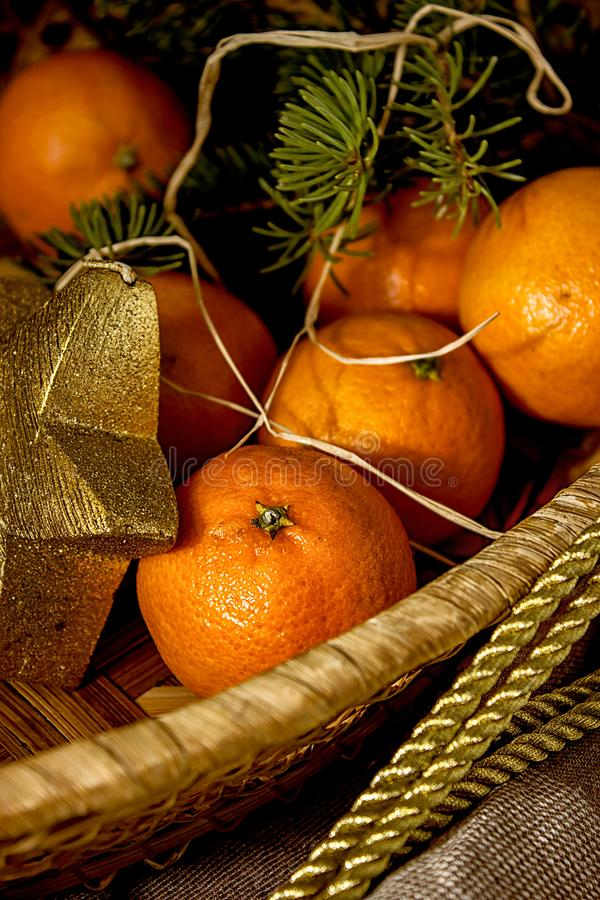 Tangerines on the background of fir branches stock photography
