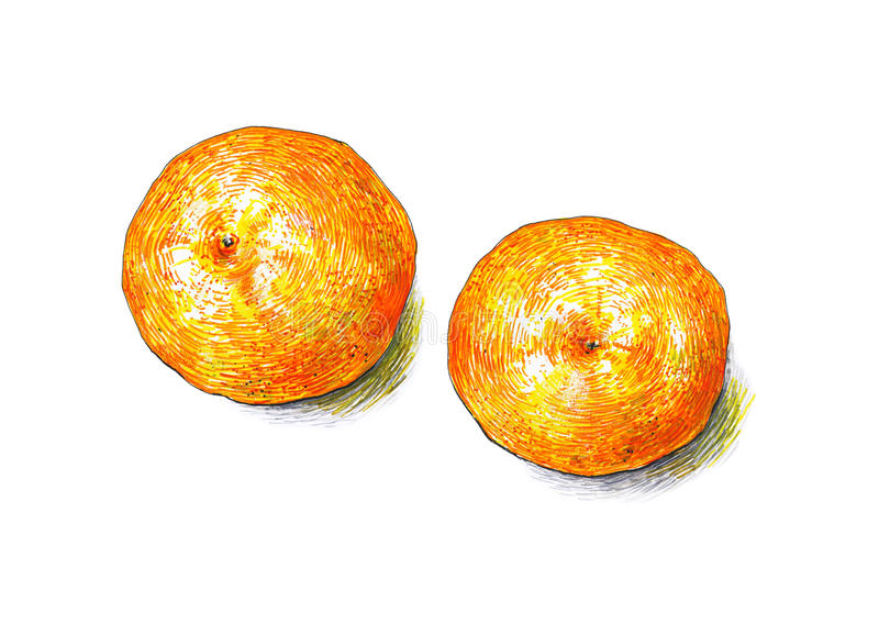 Tangerines fruits are isolated on a white background. Color sketch felt-tip pens. Tropical fruit. Handwork. Fast schematic drawing royalty free illustration