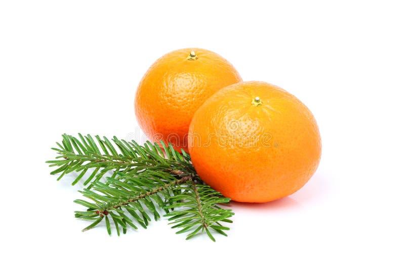 Tangerines i jedlinowa gałąź odizolowywający zdjęcie stock