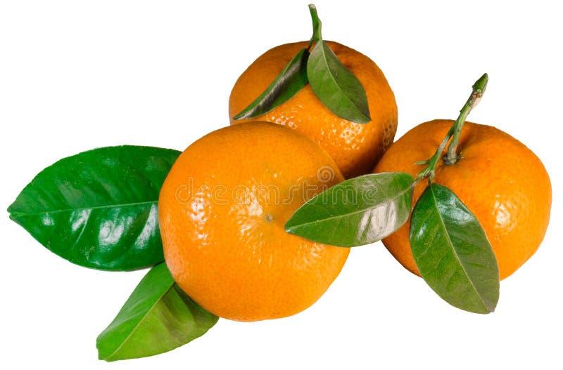 Tangerines med lämnar royaltyfri foto