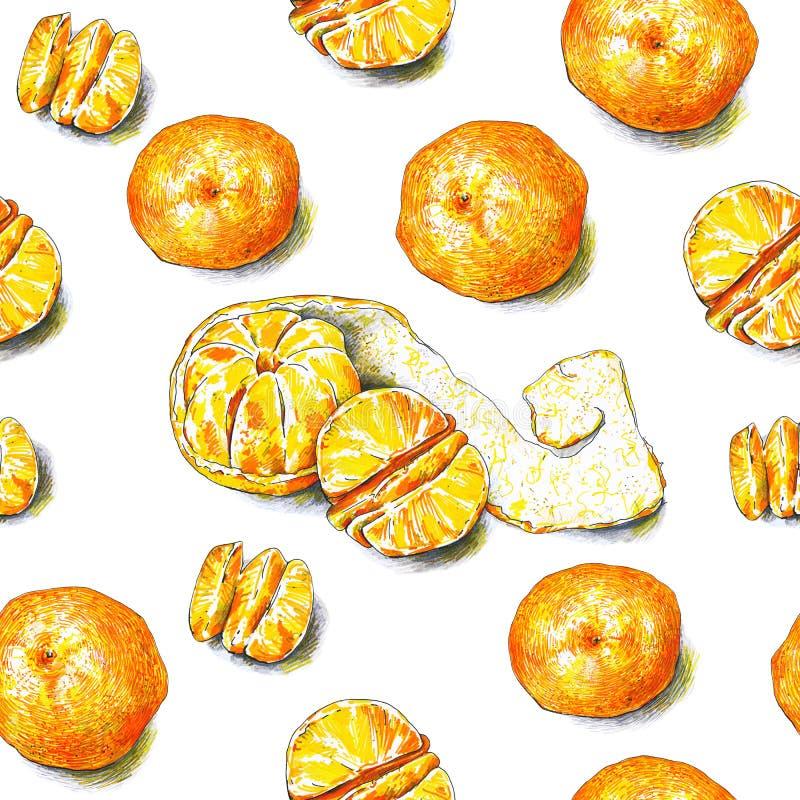 Tangerines owoc są na białym tle Koloru nakreślenia porady pióra owoce tropikalne handwork bezszwowy wzoru ilustracji
