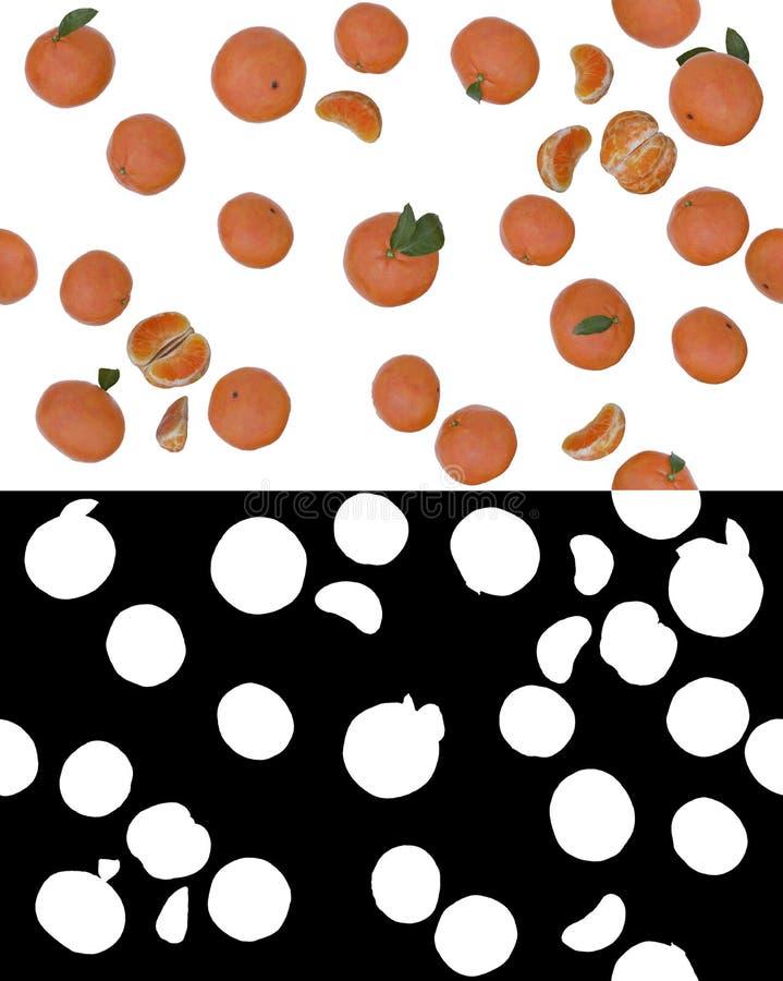 Tangerines vector illustration