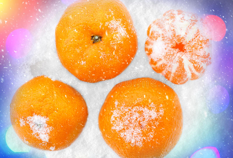 Tangerines in the snow. stock images