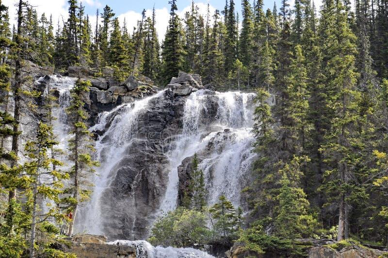 Tangle Creek Cai no Parque Nacional de Jasper imagens de stock