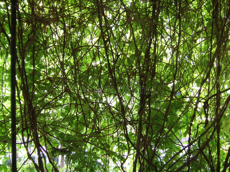 Download Tangle Of Vines Royalty Free Stock Photos - Image: 1424718