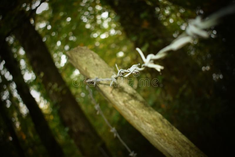 Tangled barbed wire stock images