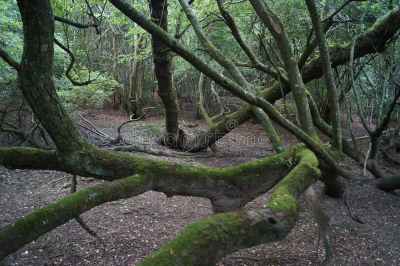 Tangled Forest royalty free stock photos