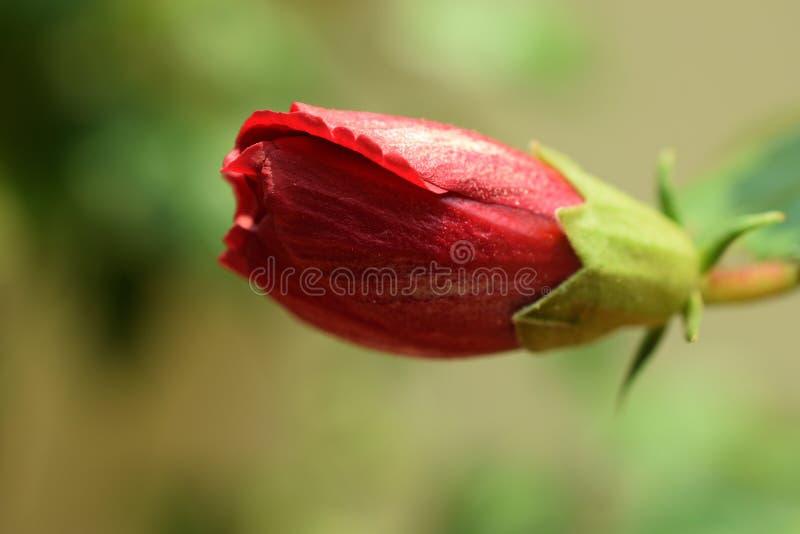 Tangled petals royalty free stock image