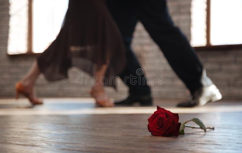 Tango superior esperto da dança dos pares da dança no salão de baile foto de stock