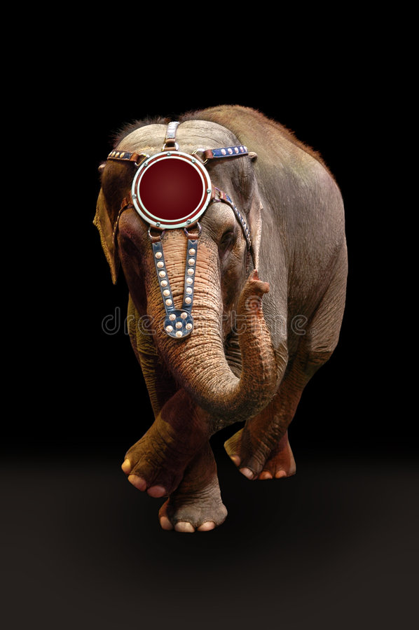 taniec, pełniącego słonia obraz stock